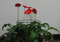 Sostegni per fiori